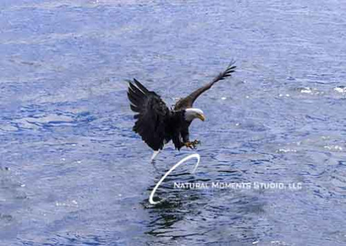 Eagle Catch